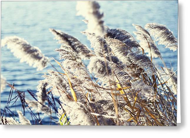 Breezy Days Greeting Card by Ariane Moshayedi