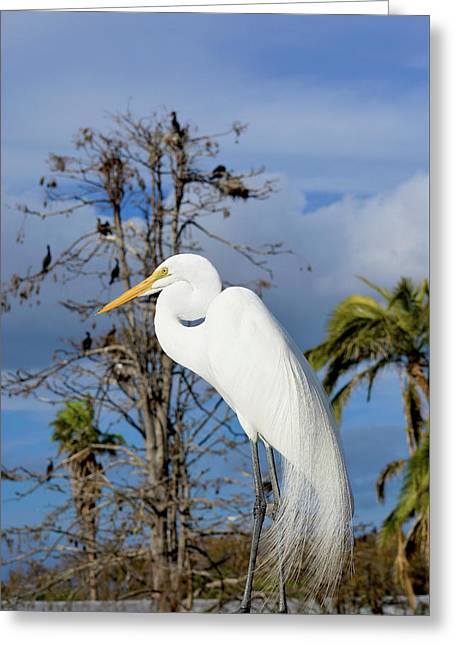 Breezy Egret Greeting Card by Josy Cue