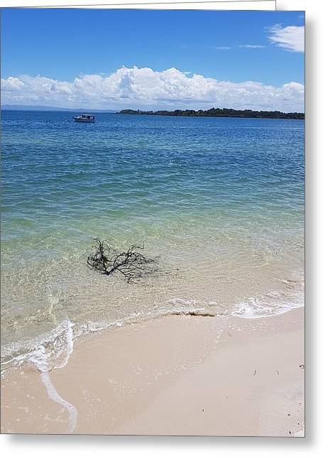 Bribie Branches  Greeting Card
