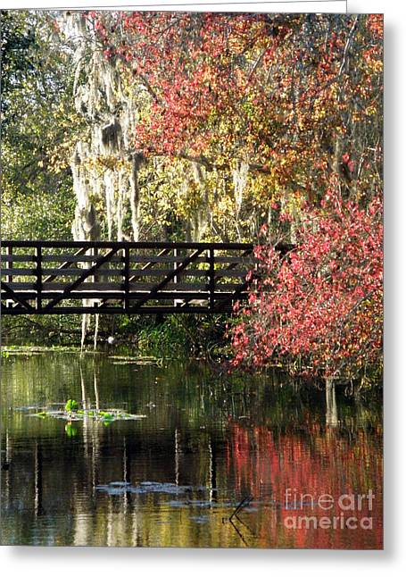 Bridge At Sawgrass Lake Park Greeting Card by Rose  Hill