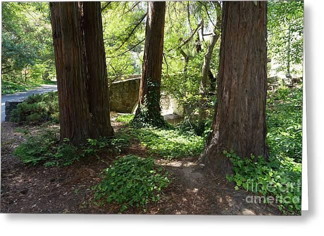 Bridge At Strawberry Creek Sproul Plaza At The University Of California Berkeley Dsc6292 Greeting Card