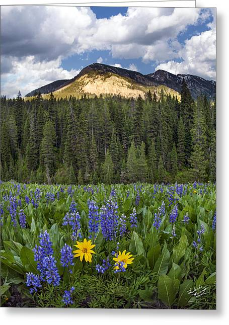 Bridger Teton National Forest Greeting Card by Leland D Howard