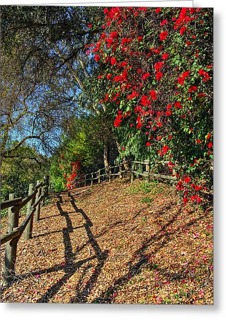 Greeting Card featuring the photograph Bridle Trail by Richard Stephen