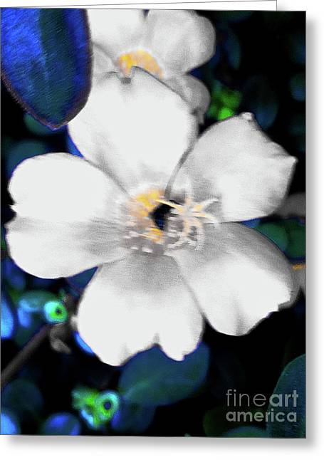 Bright Blue Accents White Vinca Greeting Card