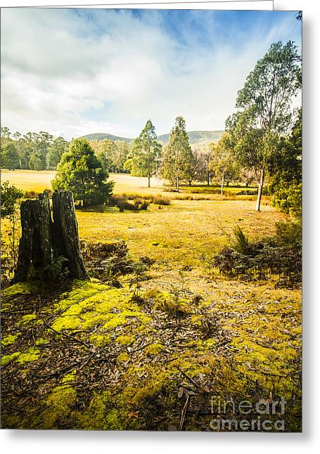 Bright And Colourful Forest Greeting Card by Jorgo Photography - Wall Art Gallery