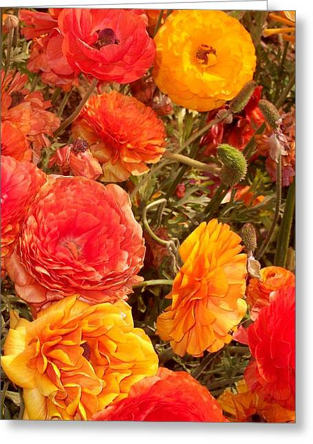 Bright And Sunny Greeting Card by Jean Booth