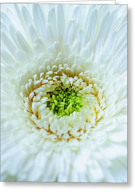 Bright As A Lime Greeting Card by Christi Kraft