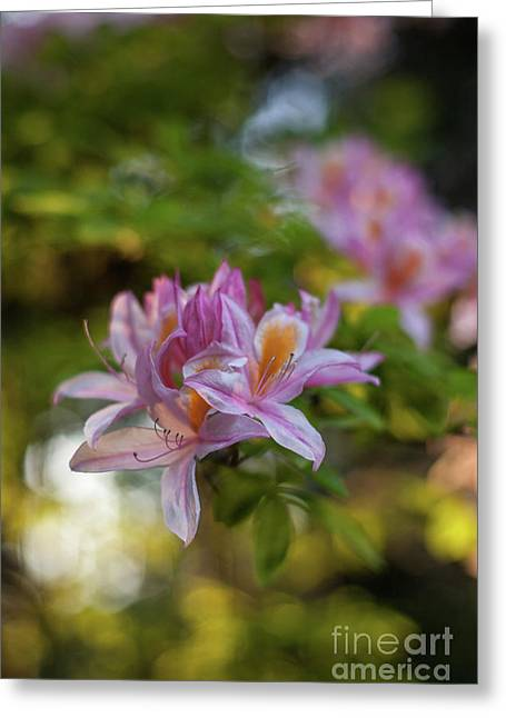 Bright Azaleas Vibrant Colors Greeting Card by Mike Reid
