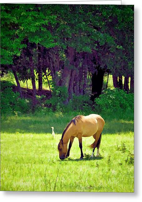 Bright Beautiful Day Greeting Card by Jan Amiss Photography