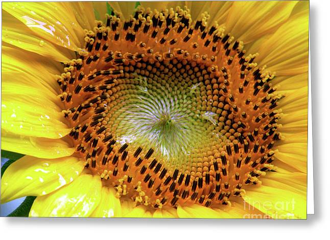 Bright Eyed And Bushy Tailed Greeting Card by Christine Belt