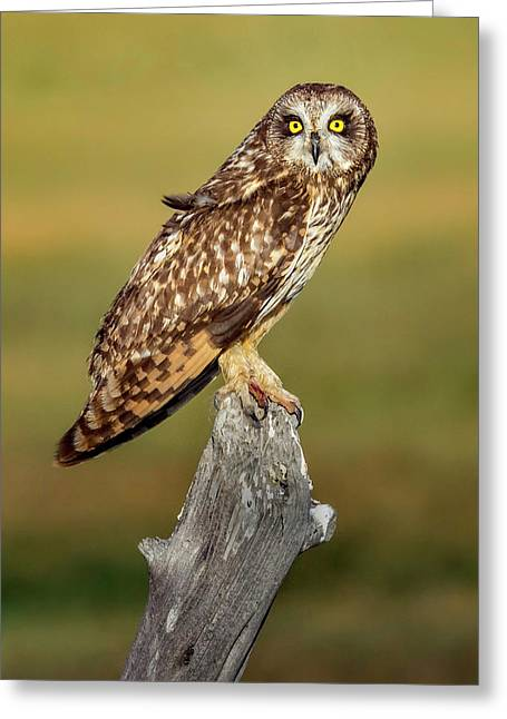 Bright-eyed Owl Greeting Card