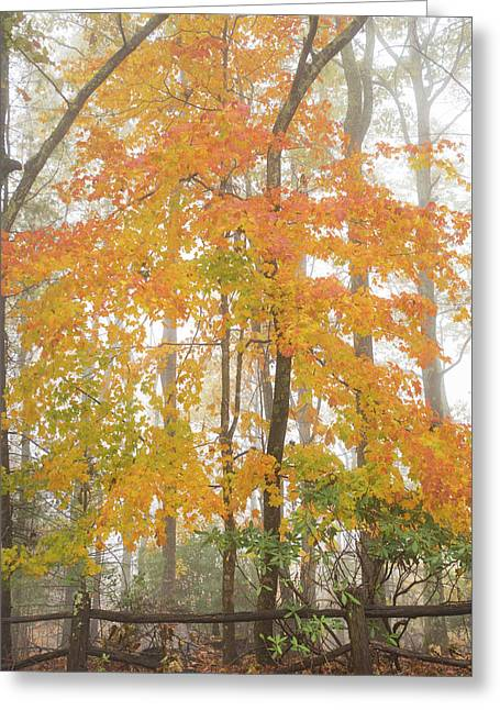 Bright Fall Greeting Card by Sallie Woodring