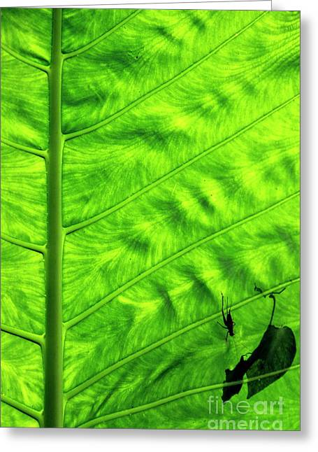 Bright Green Leave With An Insect Crawling Over Its Surface Greeting Card by Sami Sarkis