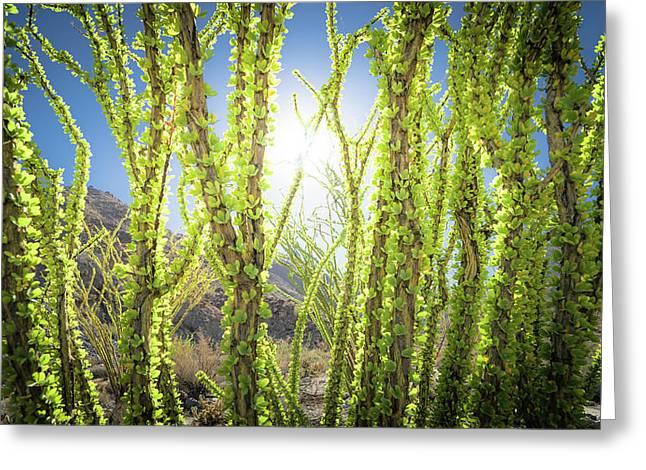 Bright Light In The Desert Greeting Card