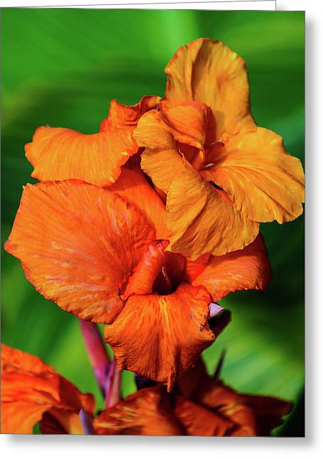Bright Orange  Greeting Card