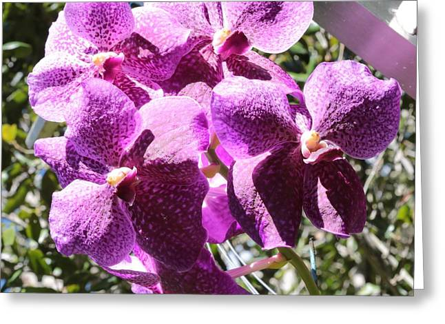 Bright Orchids Greeting Card by Carol Groenen