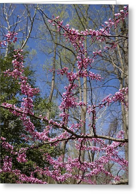 Bright Pink Rosebud Flowers Greeting Card