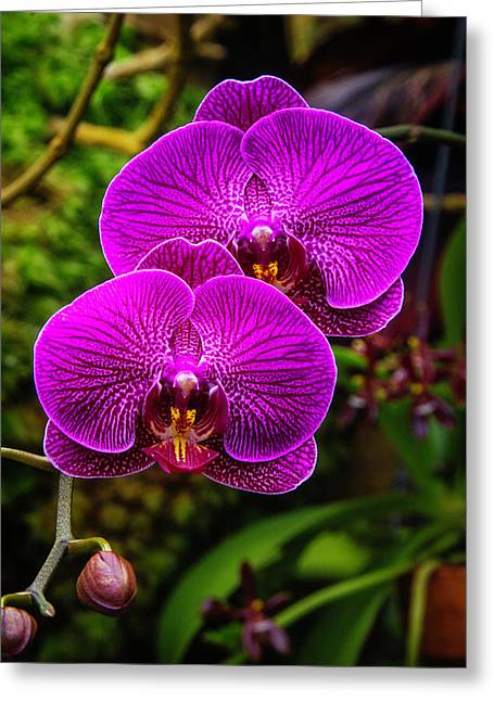 Bright Purple Orchids Greeting Card by Garry Gay