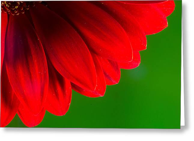 Bright Red Chrysanthemum Flower Petals And Stamen Greeting Card