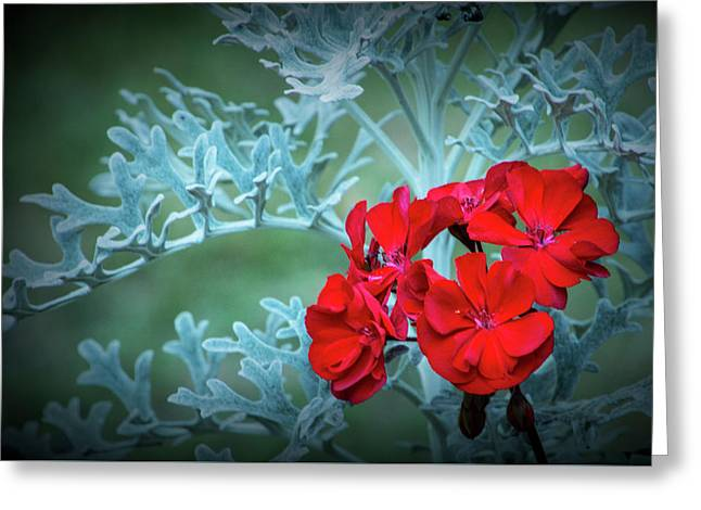 Bright Red Flower Blossom Against A Background Of Light Blue Leaves Greeting Card by Randall Nyhof
