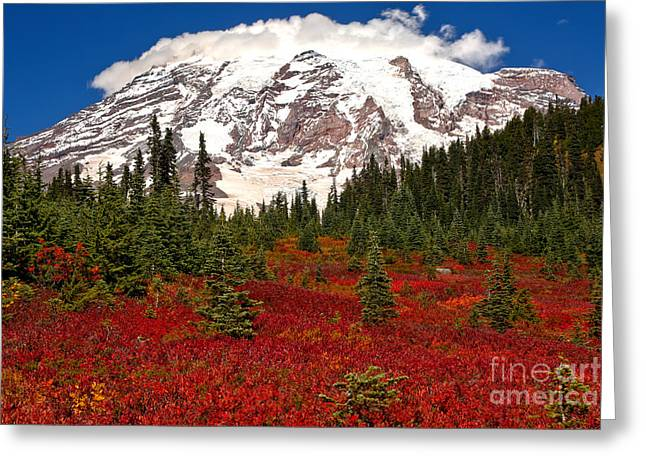 Bright Red In Paradise Valley Greeting Card by Adam Jewell