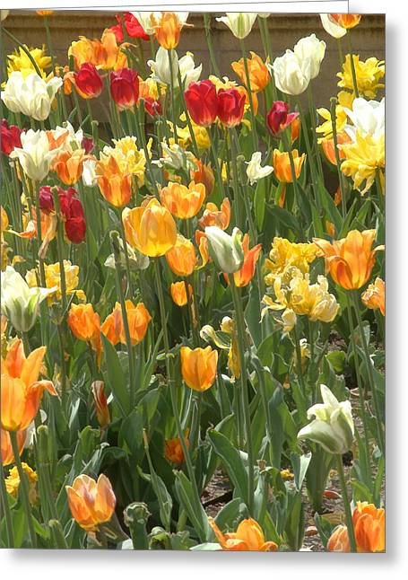 Greeting Card featuring the photograph Bright Tulips by Michael Flood