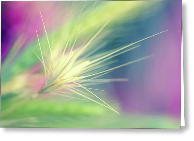 Bright Weed Greeting Card by Terry Davis