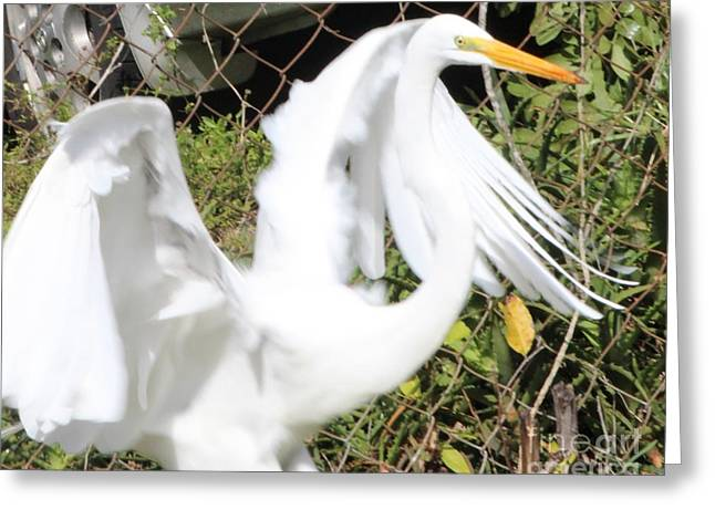 Bright White Greeting Card by Adele Sorrentino-George
