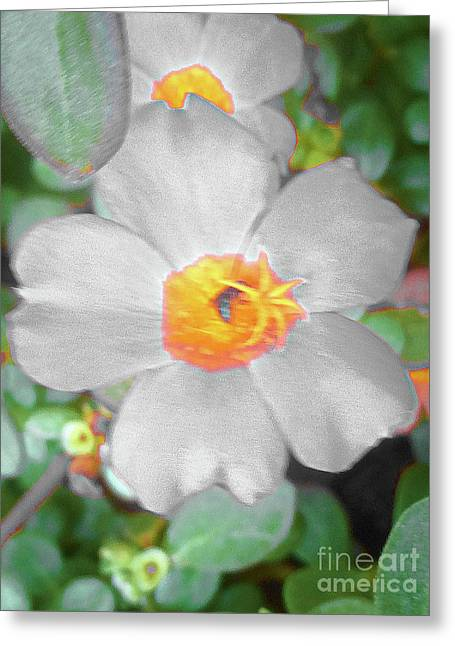 Bright White Vinca With Soft Green Greeting Card
