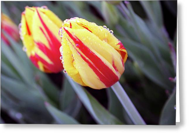 Bright Yellow And Red Tulips Greeting Card by Kami McKeon