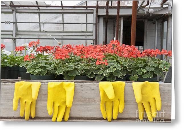 Bright Yellow Rubber Gloves And Geraniums Greeting Card by Thom Gourley/Flatbread Images, LLC