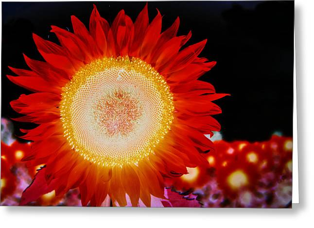 Brighter Than The Sun Flower Greeting Card