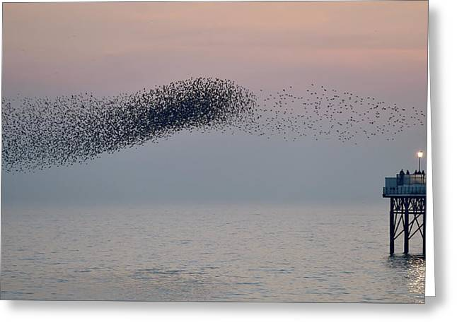 Brighton Starling Murmuration Greeting Card by Simon Dack