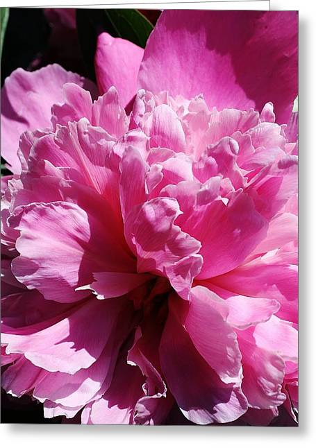 Greeting Card featuring the photograph Brillant Pink Peony by Bruce Bley