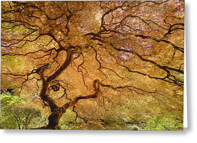 Brilliant Japanese Maple Greeting Card