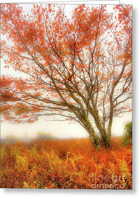 Greeting Card featuring the photograph Brilliant Orange Autumn Fall Colors Tree by Dan Carmichael