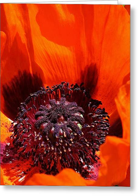 Greeting Card featuring the photograph Brilliant Poppy by Bruce Bley