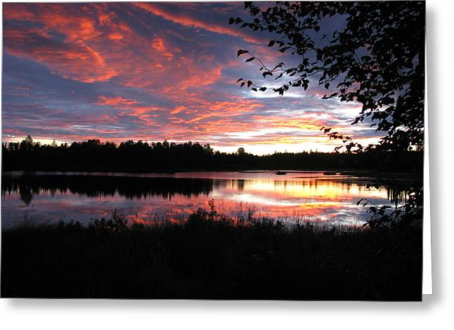 Brilliant Sunset Framed By Tree Greeting Card