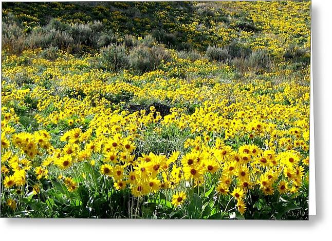 Brilliant Wild Sunflowers Greeting Card by Will Borden