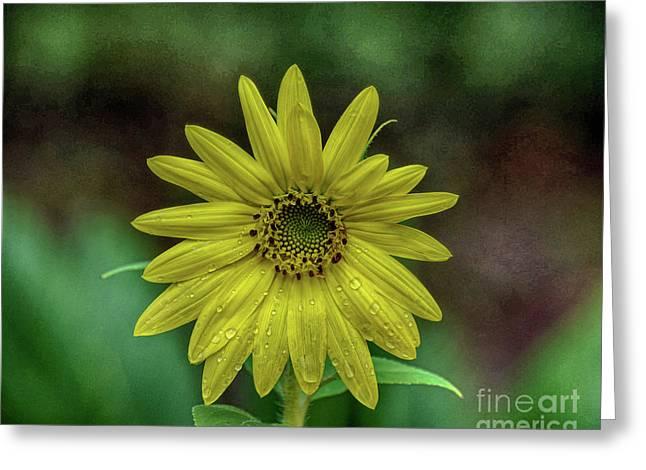 Brilliant Yellow Flower Greeting Card
