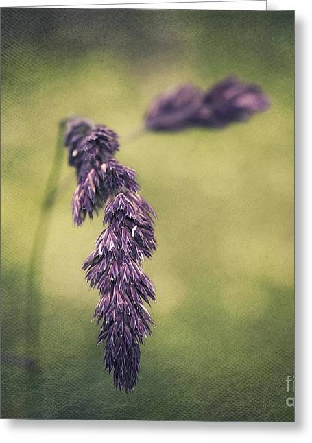 Brin D'herbe Greeting Card