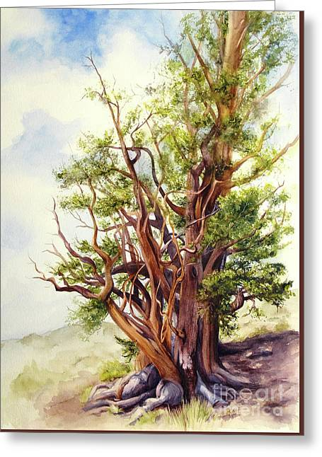 Bristle Cone Pine Greeting Card