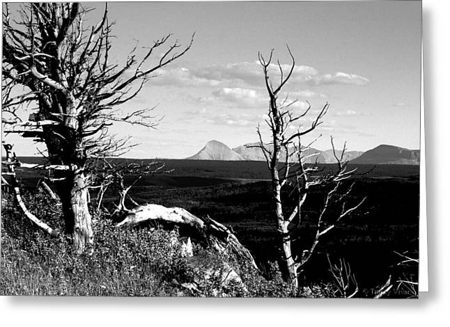 Bristle Cone Pines With Divide Mountain In Black And White Greeting Card
