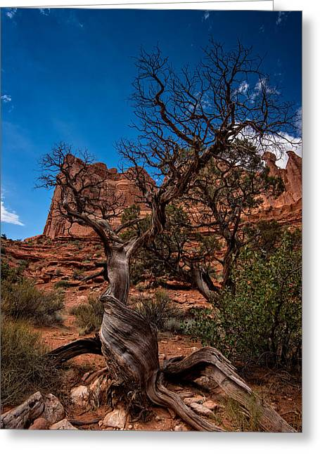 Bristlecone On Park Avenue Greeting Card