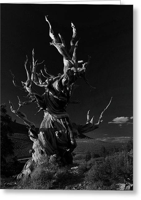 Greeting Card featuring the photograph Bristlecone Pine by Art Shimamura