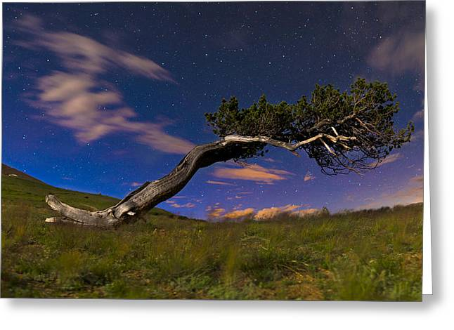 Pines Greeting Cards - Bristlecone Pine Greeting Card by Noah Bryant