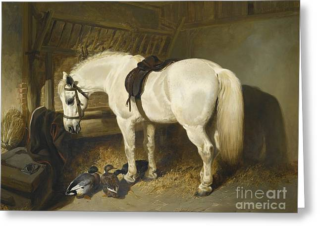 British A Grey Pony In A Stable With Ducks Greeting Card by MotionAge Designs