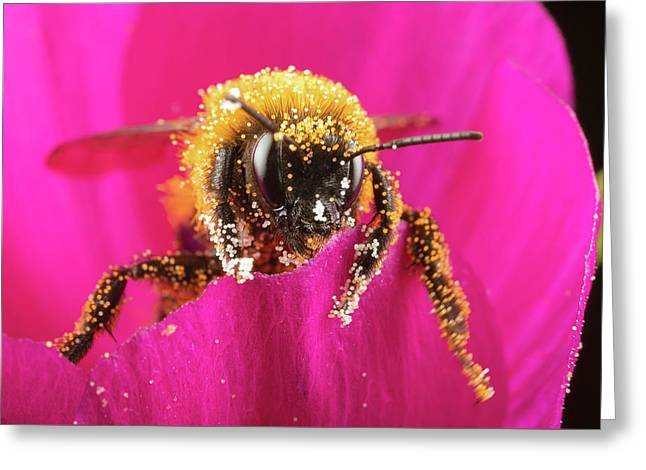 Greeting Card featuring the photograph Bro Got Any Pollen by Brian Hale