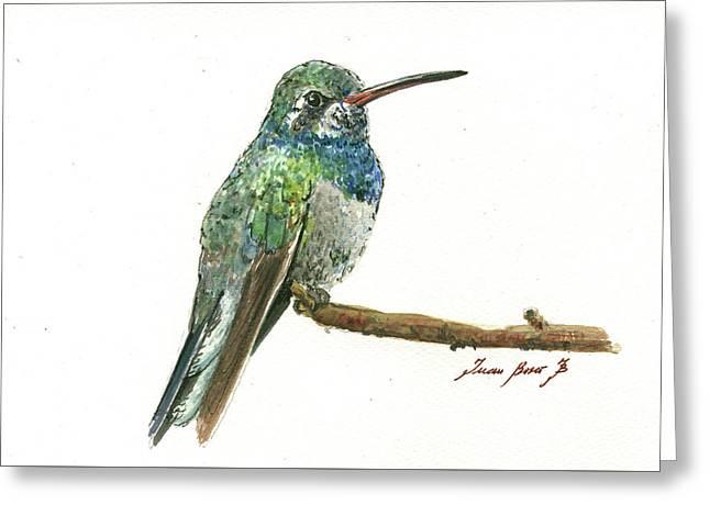 Broad Billed Hummingbird Greeting Card by Juan Bosco