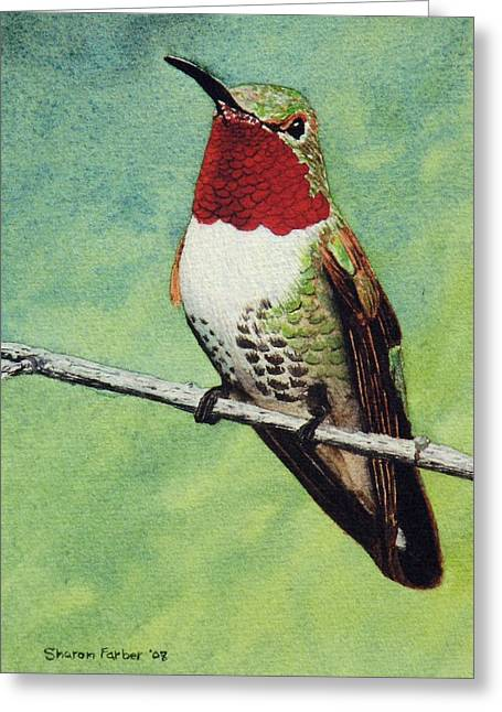 Broad-tailed Hummingbird Greeting Card by Sharon Farber